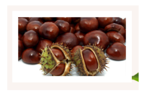 Liquid Chestnut - Italia - originale - in farmacia