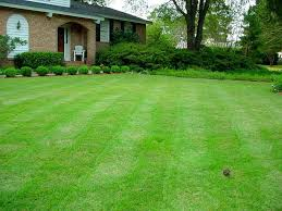 Perfect Grass - prezzo - amazon - dove si compra
