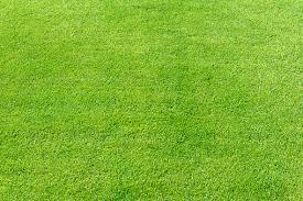 Perfect Grass - come si usa - funziona