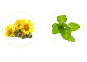 Varikos - ingredienti - come si usa - funziona - composizione