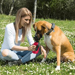 Doggy Bottle - ingredienti - come si usa - funziona - composizione