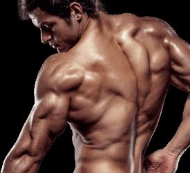 X-Muscle - ingredienti - composizione - funziona - come si usa