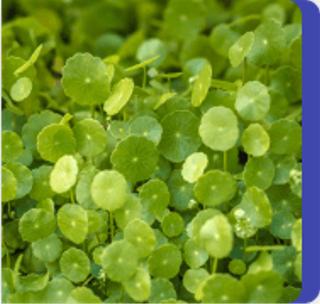 Sunsara Varicose - funziona - composizione - ingredienti - come si usa