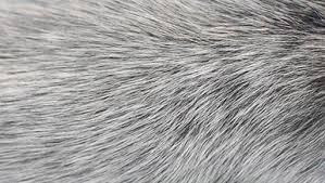 Anti-Grey Treatment - funziona - composizione - ingredienti - come si usa
